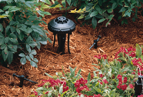 Rain Bird Drip Irrigation
